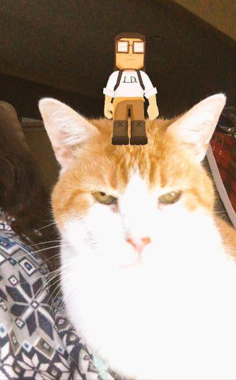 LI DOE was a hit with my cat, Palpatine